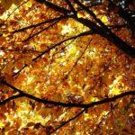 rumore rosa foglie